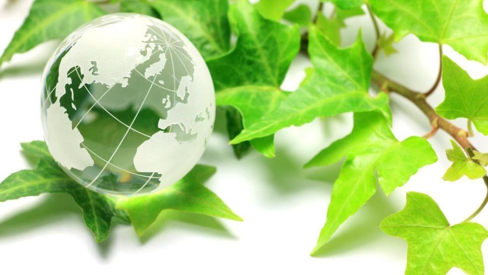 透明な地球と枝葉